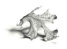 Landscape Drawings in Pencil | Drawing Basics: Dee Overly's Colored Pencil and Graphite Drawings