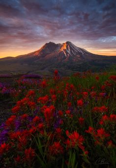 This is the last older image of mine that I decided to go back and reprocess for now. I have a lot of newer images from Summer trips to go through, but this one from a couple of years ago at Mount St. Helens had been irking me for a while.   This was taken on an early Summer morning and was the first time I had the chance to see this spectacular mountain in all of its glory. It was a scene like no other I had ever witnessed. A landscape with obvious evidence of the famous eruption. Yet, it…