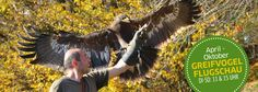 Wildpark Altenfelden Short Trip, Austria, Trips, Horses, Animals, October, Vacation, Traveling, Animales