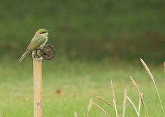My Birding Trails...