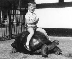 Dublin Zoo - One of The Most Popular Attractions in Ireland Dublin Zoo, Giant Tortoise, Online Tickets, Zine, Old Photos, Attraction, Ireland, Old Pictures, Vintage Photos