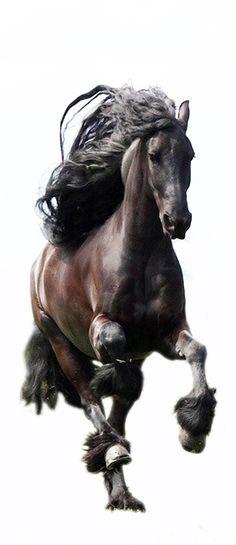 ♥ Beautiful Horse