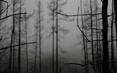Image result for wallpaper images of dark winter forests