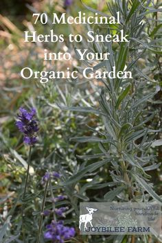 By growing herbs yourself, in your own garden, you get the freshest, most…
