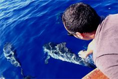 Dolphin watching in Calabria (Italy)!