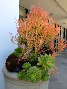 Succulent Gardening, California Style | Apartment Therapy