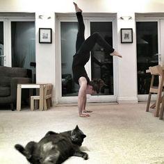 """<p>""""Si mi humana hace ejercicio, yo me motivo también e intento hacer unos abdominales…"""" (Instagram, Reddit, Facebook) </p>"""