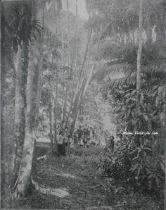 Barreto (1898)