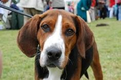 Image result for dog face photo