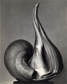 Shell by American photographer Edward Henry Weston (1886-1958).