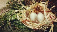 Birds Nest for the third week of Winter Solstice