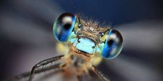 close-up-dragonfly