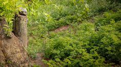 UnParSinRumbo Cultivos en la ciudad