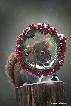 HAPPY HOLIDAY !     JOYEUSES FÊTES !    Καλά Χριστούγεννα!         NATALE ALLEGRO !  FELIZ NAVIDAD !  FROHE WEIHNACHTEN ! Vrolijk Kerstmis!              Feliz Natal! Berry is a bird                Red is a squirrel                 Andre is.........me