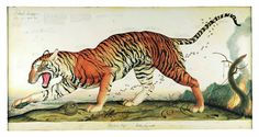 Risultati immagini per walton ford animali esotici