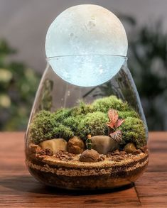 This Company Makes Incredible Micro Ecosystems In Pots And You Will Definitely Want One In Your Home Mini Terrarium, Glass Terrarium, Succulent Terrarium, Self Sustaining Terrarium, Plant In Glass, Paludarium, Terraria, Glass Containers, Glass Jars