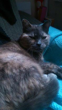 C'est mon chat; Yvette