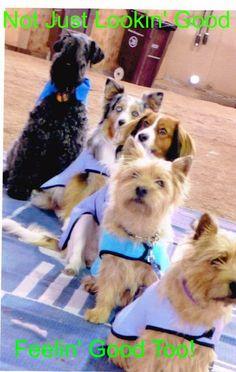 Made by De - Quality Custom Dog Coats and Dog Clothing - My Dog Blog