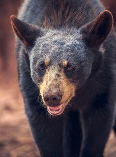 Happy bear!