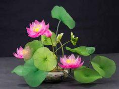 Nylon Flower Galley