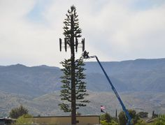 Construction on a fake tree cell tower.   Thin branches and clearly taller than other trees and structures in the area. Fake Trees, Work Tools, Pine Tree, Towers, Branches, Camo, Construction, Earth, Diy