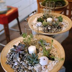 How to Make Succulent Centerpieces   camp cactus: spring classes are starting soon!