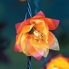 This beautiful flower is actually on a string of outdoor lights... cute!