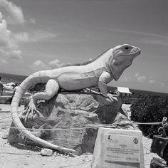 An iguana sculpture, Isla Mujeres http://www.chasingruins.com/