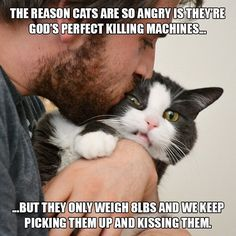 Funny cats, silly cats, funny cat memes, funny quotes, animals and pets Funny Cat Compilation, Funny Cat Memes, Funny Shit, Funny Cat Fails, Cats Humor, Funny Videos, Funny Stuff, I Love Cats, Crazy Cats