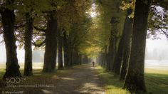 Avenue Morning Walk by Maxxxworld  Hellbrunn alps austria autumn avenue blätter colors colours europe fall fog forest herbst leaf leave