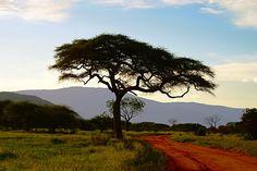 Kenya Photography, Kenya Landscape, Countryside, Trees, Colour, Road, Wall Art - pinned by pin4etsy.com