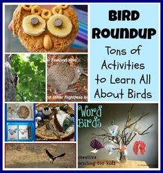 Tons of Activities to Learn about Different Birds {Bird Roundup}