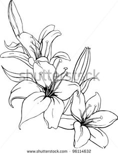 Lily silhouette vector free Free vector for free download about ...