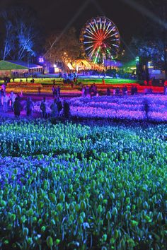 Floriade, the annual flower show in Sept/Oct, in all its nighttime glory.