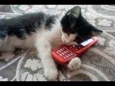 funny cats videos - part 97