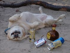 I'm guessing someone had a rough night :P