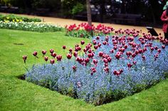 London London Photos, Photo Diary, Beautiful Places, Flowers, Plants, Plant, Royal Icing Flowers, Flower, Florals