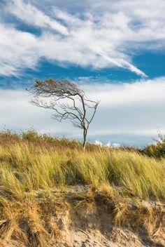 Weststrand, Ostsee, Darß