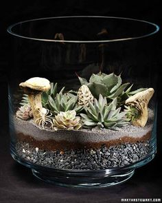 Making beautiful terrariums is a perfect way to bring the outside indoors during the winter months.