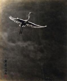 Lang Jingshan(1892-1995) - 鹤 银盐相纸 Fan Ho, Famous Photographers, Sea Waves, China, Sky And Clouds, Global Art, Art Market, Chinese Art, Natural History