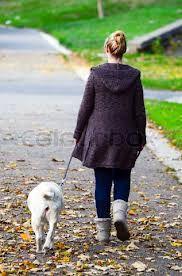 Educación básica del perro: de paseo https://theyellowpet.blog/educacion-basica-perro/