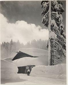 Morning, Badger Pass, Yosemite National Park; Ansel Adams (American, 1902 - 1984); Yosemite, California, United States; 1940; Gelatin silver print; 23.5 x 18.7 cm (9 1/4 x 7 3/8 in.); 85.XM.256.1; Copyright: © The Ansel Adams Publishing Rights Trust