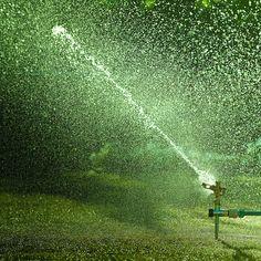 Play in the sprinkler