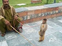 Animal Abuse in Lake View Park Islamabad Pakistan Lake View, Monkey, Blessed, Letter, Peace, Youtube, Jumpsuit, Monkeys, Sobriety