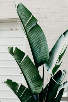 41 Super ideas for plants wallpaper iphone leaves tropical House Tree Plants, Trees To Plant, Tree Garden, Tropical Leaves, Tropical Plants, Tropical Design, Tree Leaves, Plant Leaves, Tree Tree