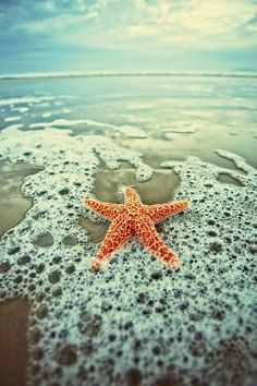 Loved finding starfish on the beach.  It was always exciting to find one with an additional leg or one growing a new leg.