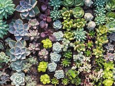 Create your own succulent display, decorate a cake, or play BINGO with drag queens FUN IDEAS