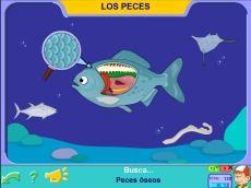 Los Peces #peces #educacion #edu #fish #escuela #aprender #pipo