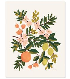love this Citrus Floral Print from Rifle Paper - 16x20 illustrated art print from an original painting.