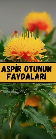 Aspirin, Benefit, Herbalism, Herbs, Organic, Diet, Healthy, Nature, Plants